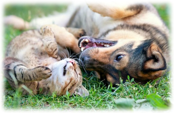 Happy dog and cat in grass (photo)